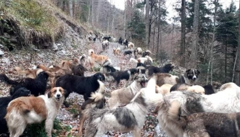 Travnik konačno dobiva azil za napuštene pse!